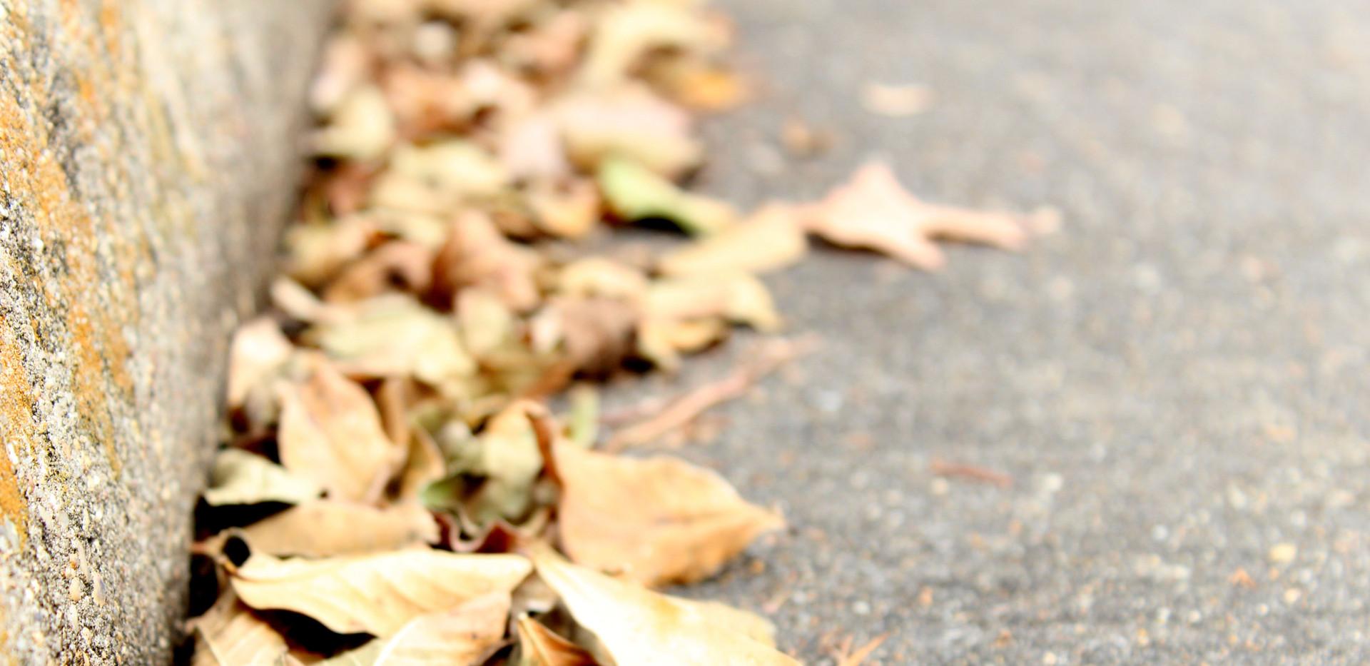 libbie-leaves on ground.JPG