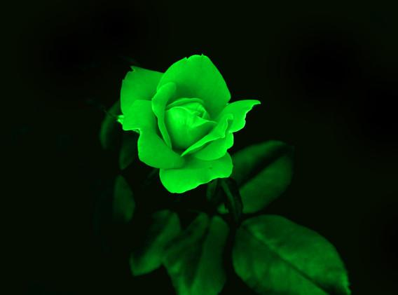 Mary Ann green flower_1062.JPG