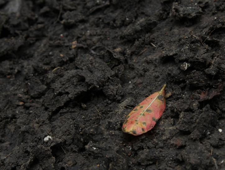 libbie leaf on dirt wabi sabi.JPG