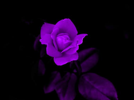 Mary Ann  purple flower_1062 - Copy - Co