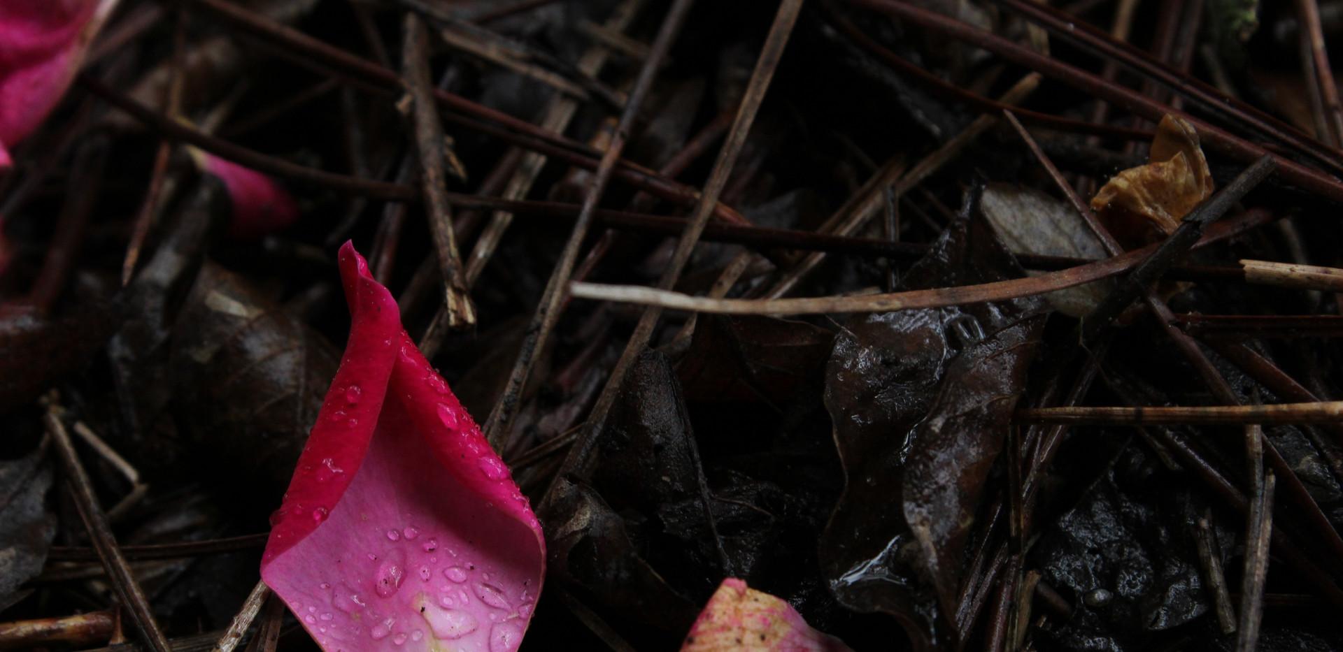 libbie flower petals on the ground wabi