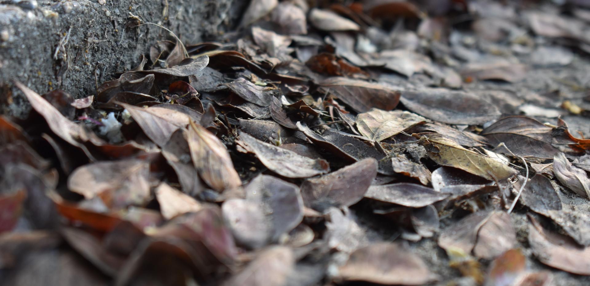 leaves texture meredith.JPG