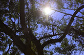 worms eye tree with sun-edited.jpg