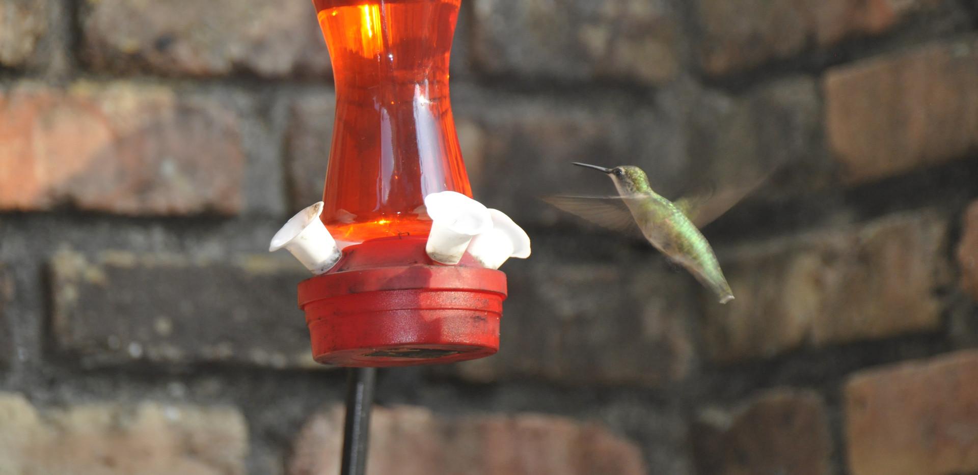 libbie humming bird.JPG