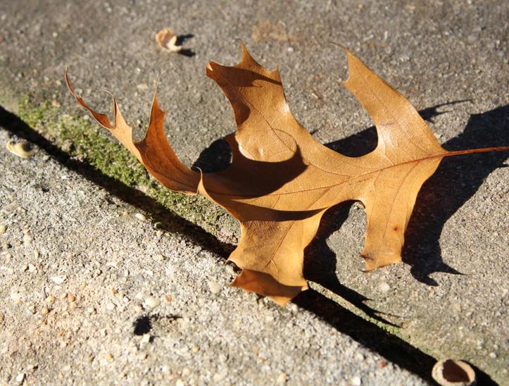 libbie-leaf.JPG