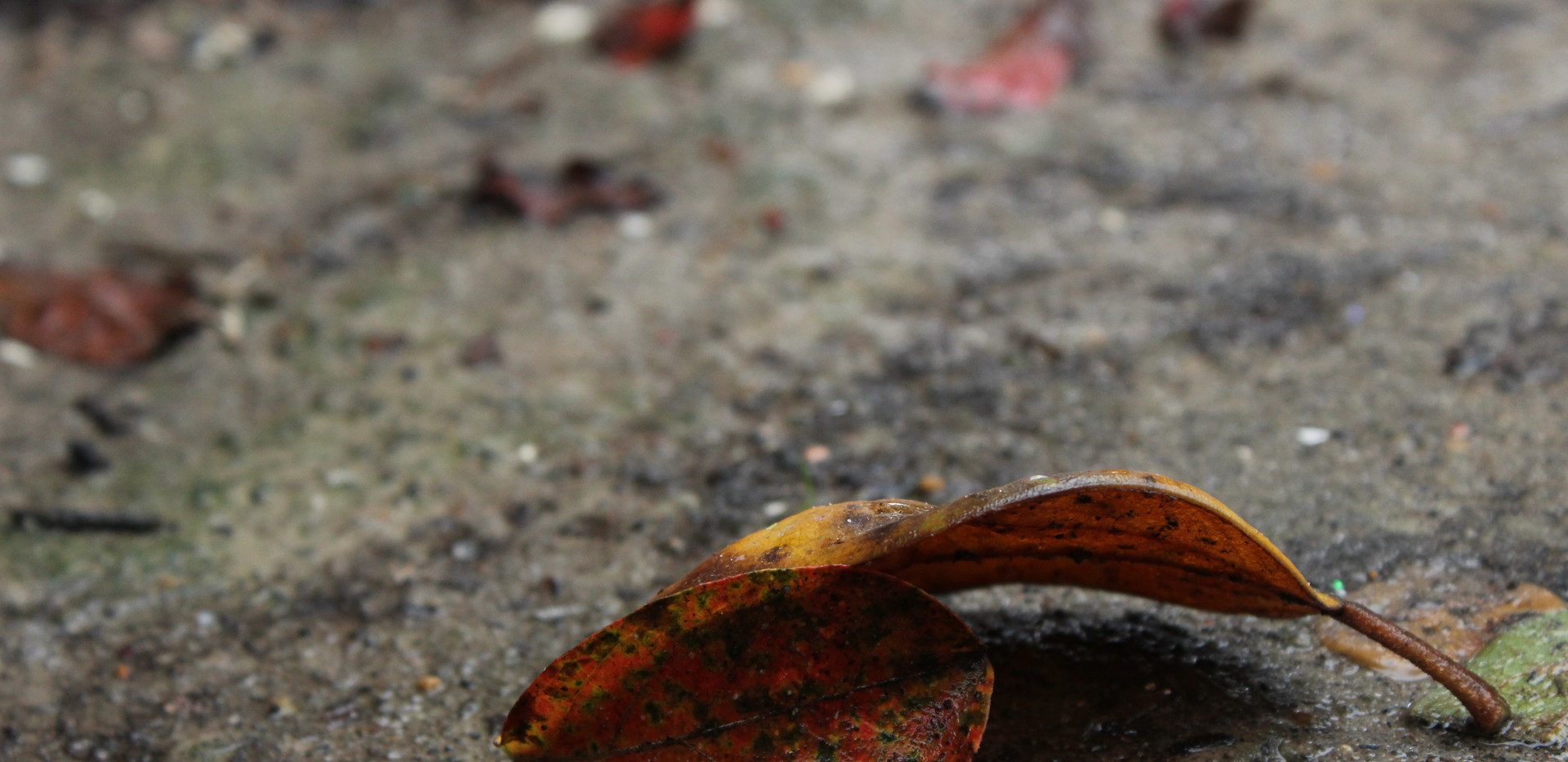 libbie wabi sabi dying leaf on the GROUN