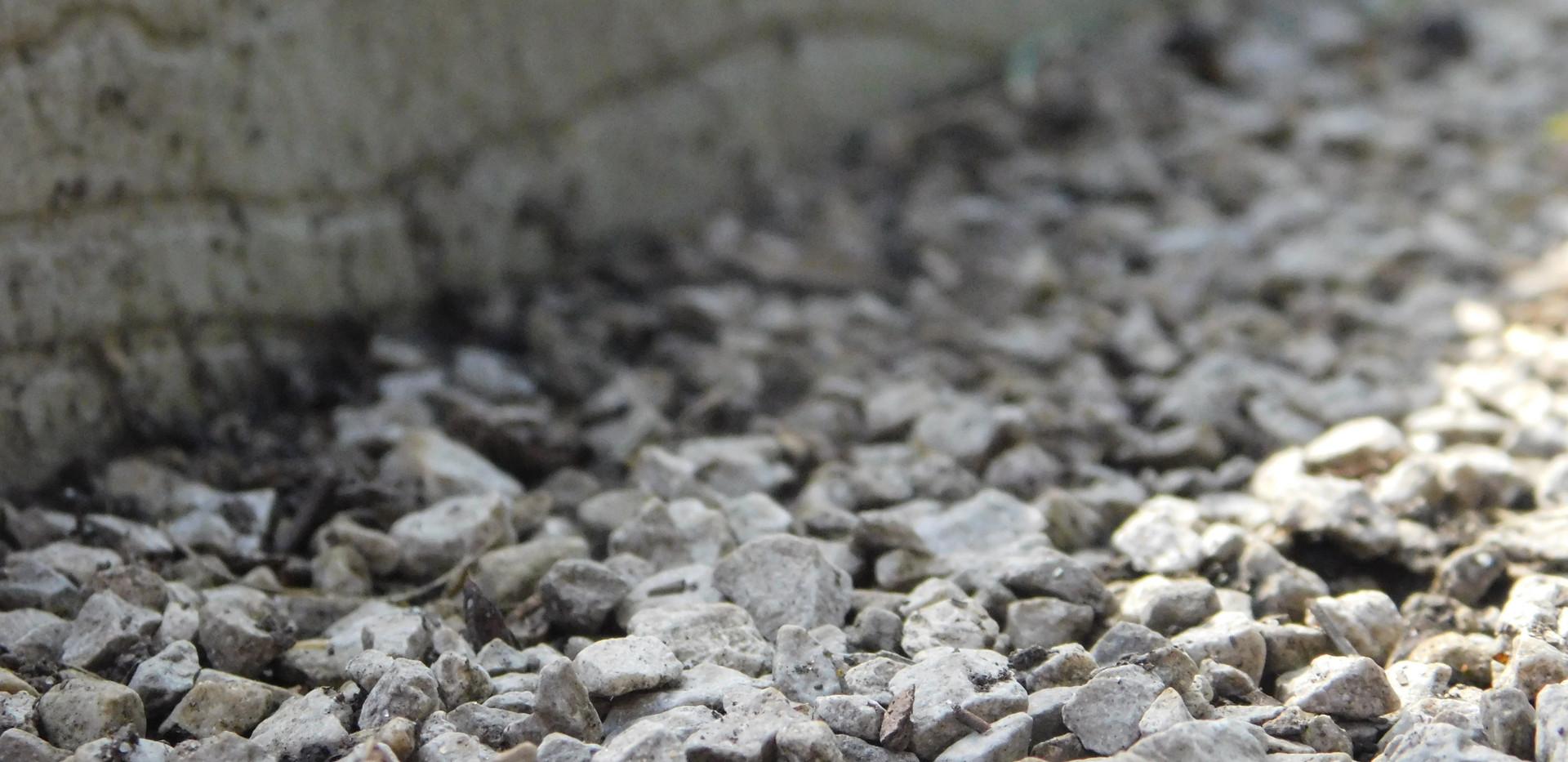 libbie close up rocks.JPG