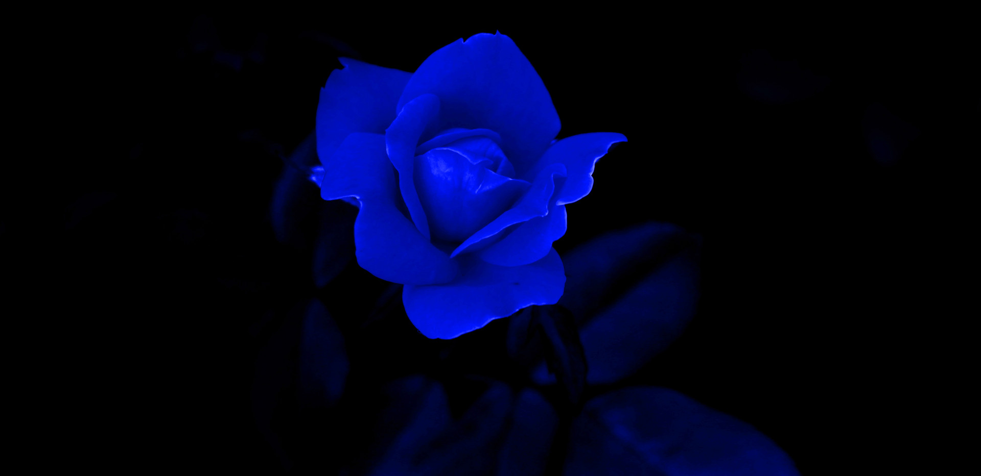 Mary Ann blue flower 1062 - Copy.JPG