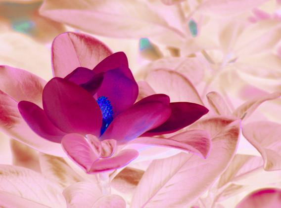 Mary Ann inverted flower_9113.JPG