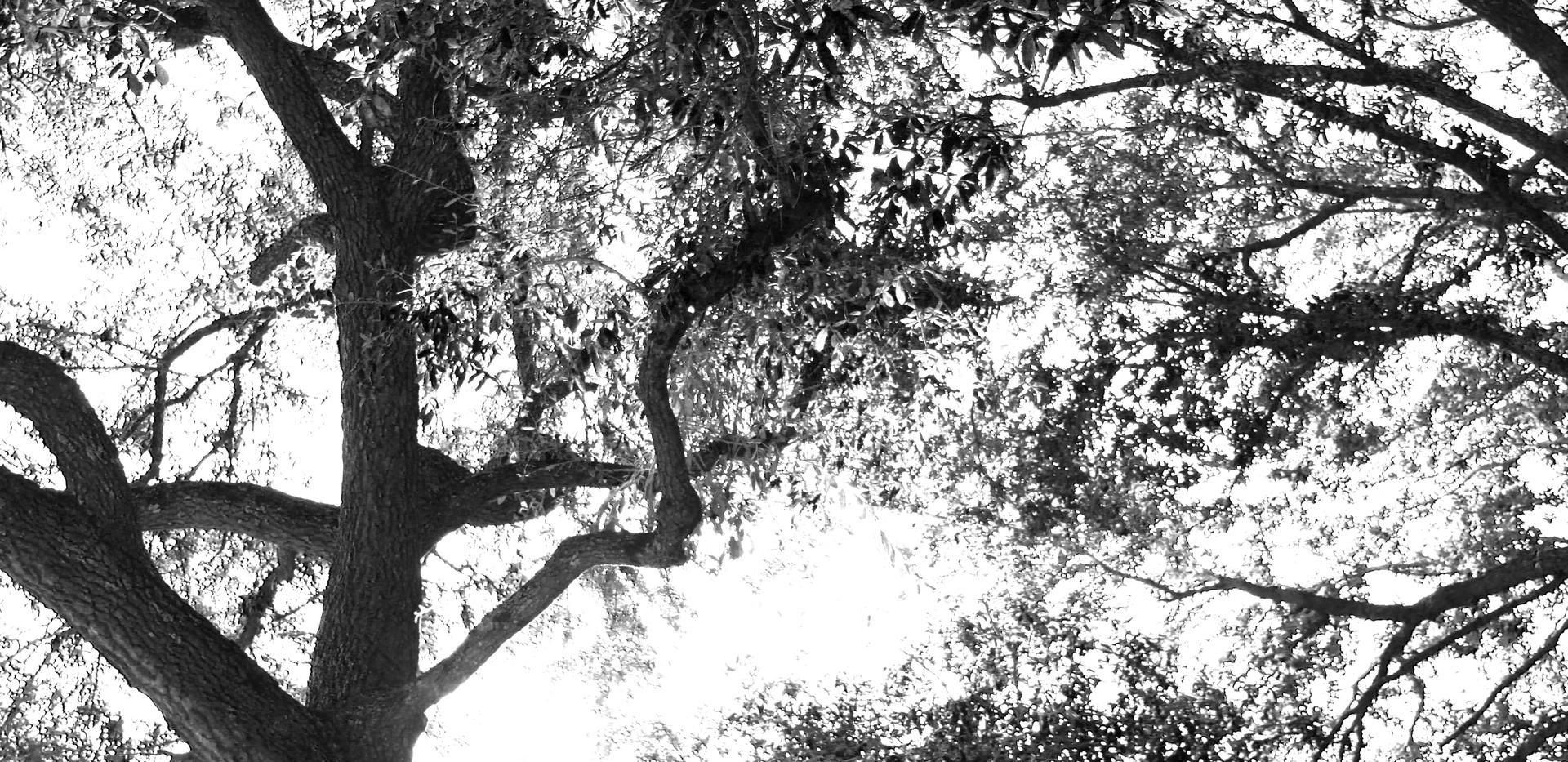 Mary Ann tree_8895.JPG