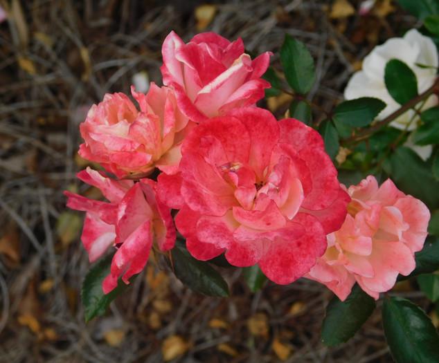 dying flower.JPG