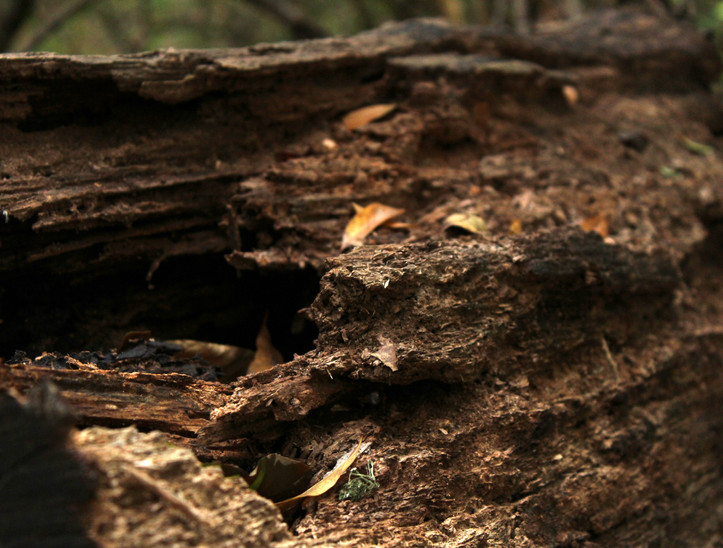 libbie-dead log.JPG