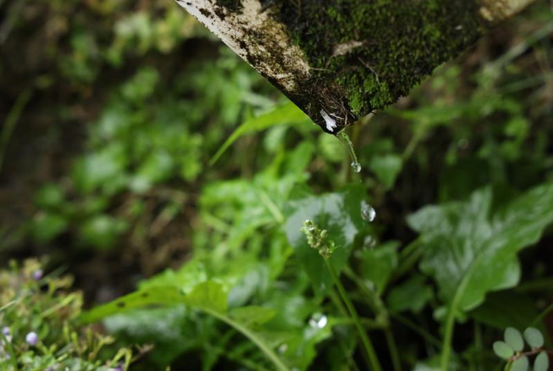 Eva Water Drop Wabi Sabi.JPG