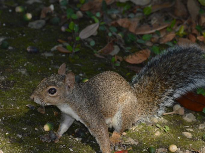 margaret squirrel nature. jpg.JPG