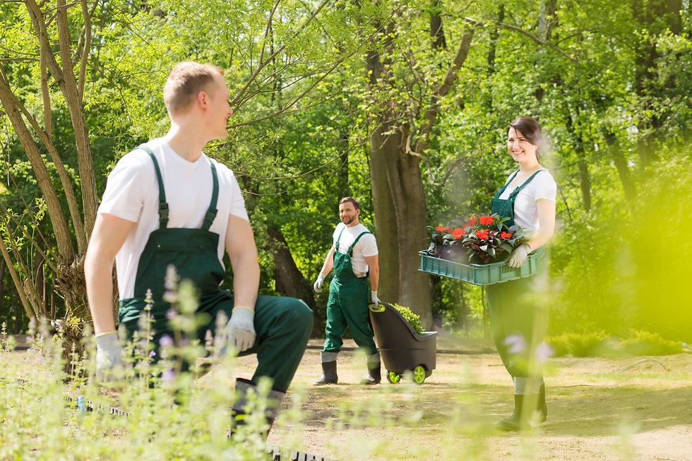 gardeners-planting-flowers-in-park-PHB88