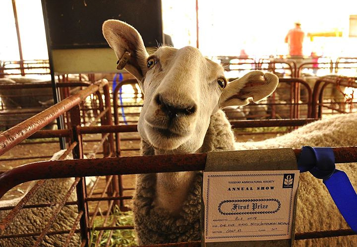 Toodyay Agricultural Show