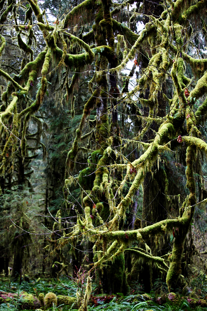 Hoh Rain Forest National Park, WA