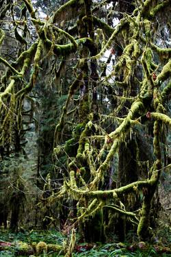 Hoh Rain Forest National Park, WA