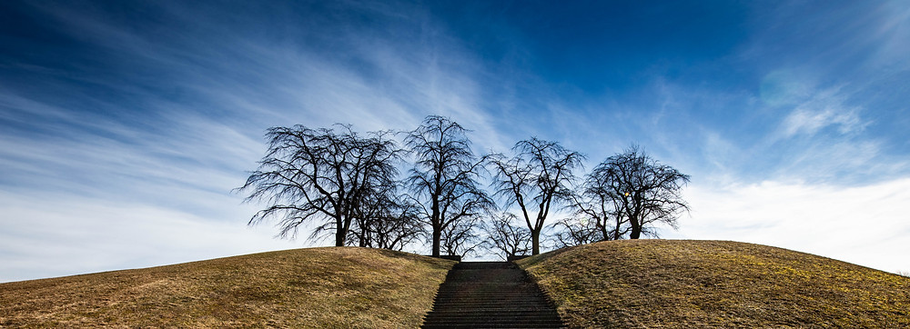 Trees on top of a small grass hill with sky in the background.