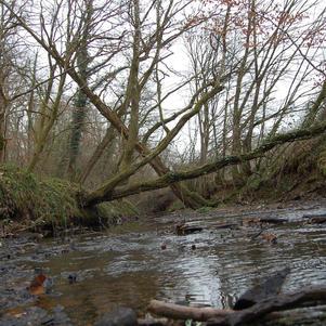 Ruisseau de Coulombière dans la forêt de GrosBois Par Adeline de Bourbon