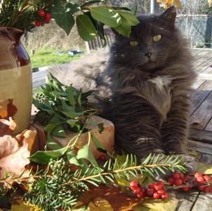 Scruffpot le chat parmi le feuillage d'Automne Anne de Pouzy