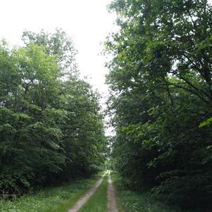 Bouffée d'oxygène en Forêt de Grosbois le 11 mai 2020 Par Fanny de Bourbon