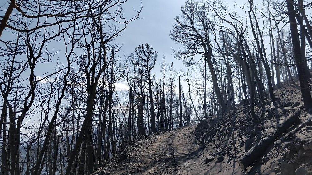 A section of road surrounded by burned forest.  This area got VERY hot and also damaged the power line nearby.