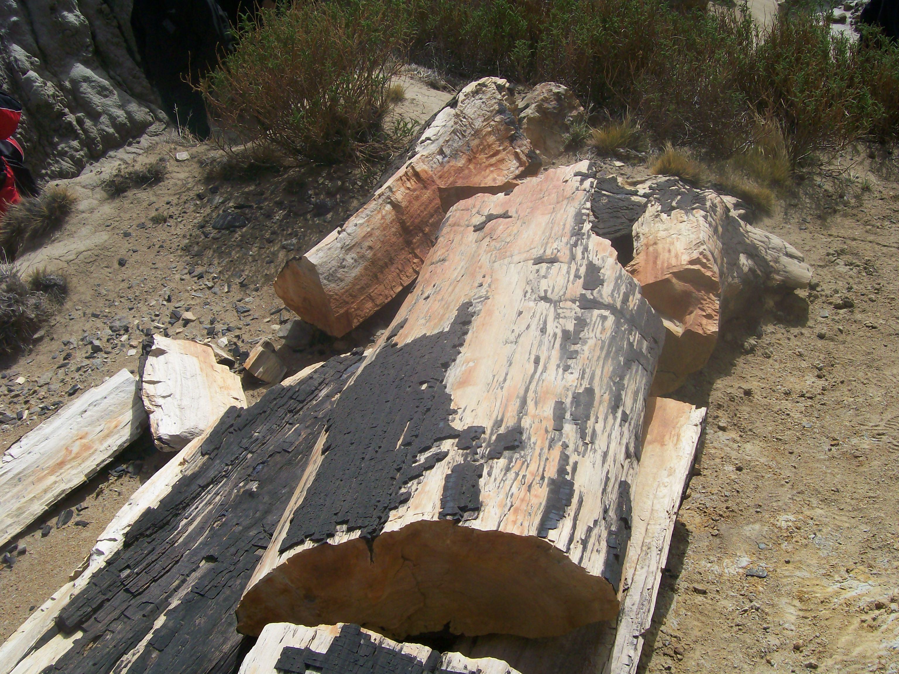 Bosque Petrificado