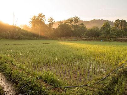 farm, Small Bamboo Islands, Palawan, Philippines