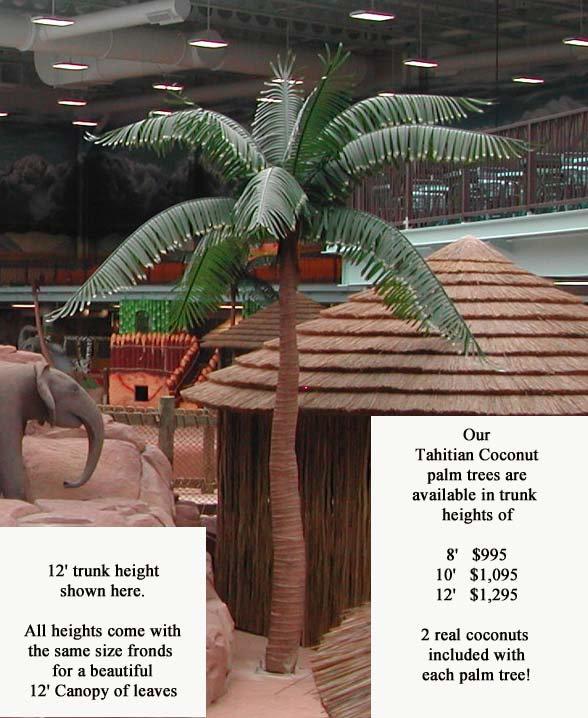 Kalahari single tree SALES for web 10-20