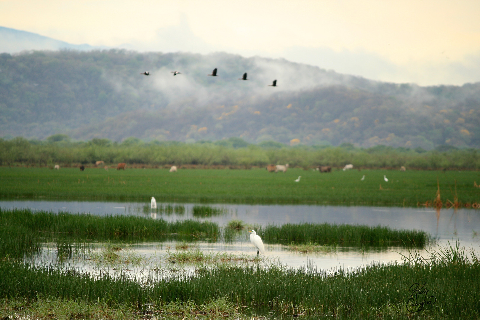 Wetlands, Costa Rica.JPG