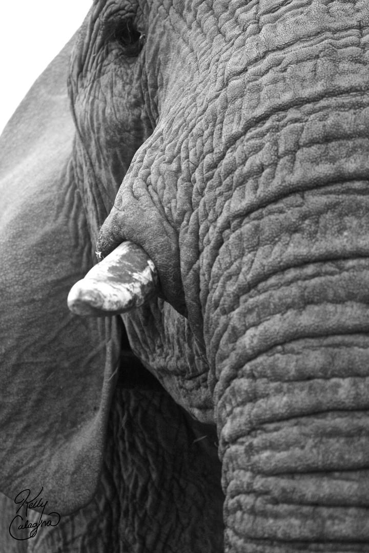 Ebony and Ivory, Zimbabwe.jpg