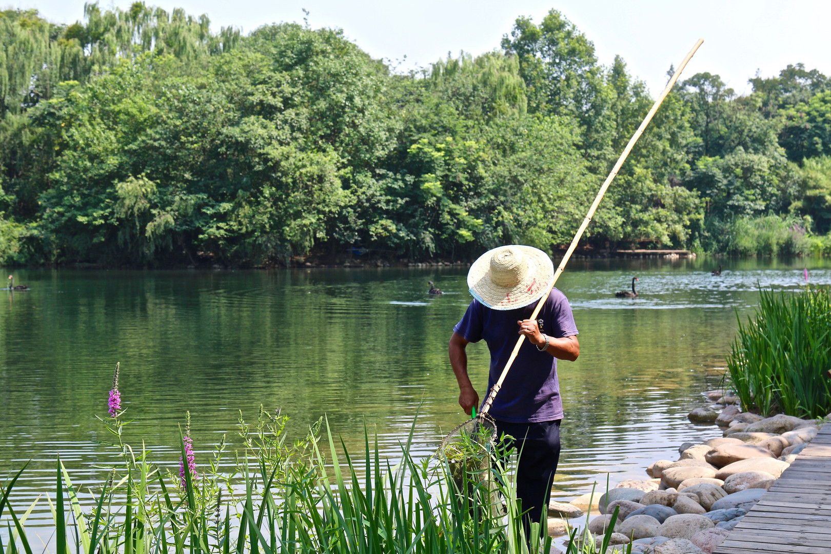 A man cleans a swan pond at the Panda Ba