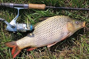Рыбалка, платная рыбалка, коттеджи в аренду, база отдыха, баня, сауна