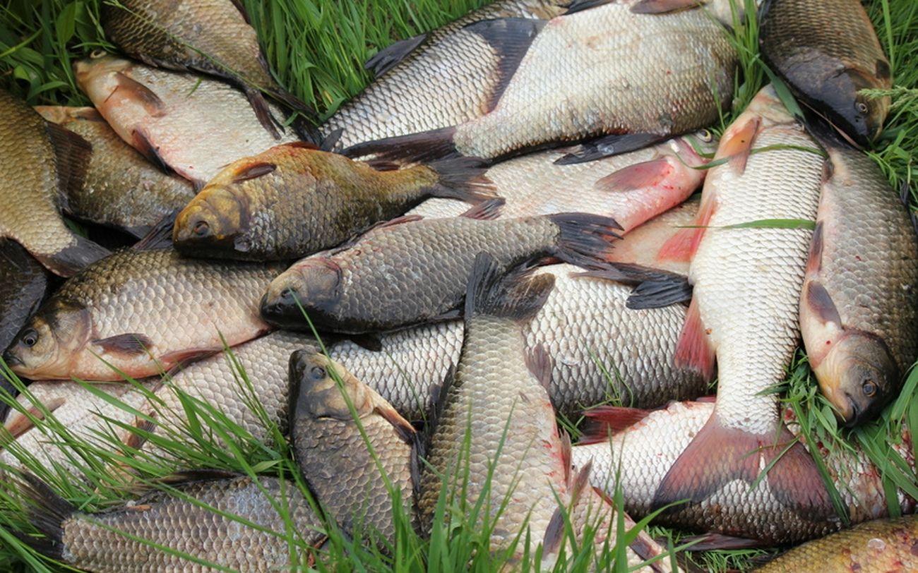 Рыбалка БО Юромка 4