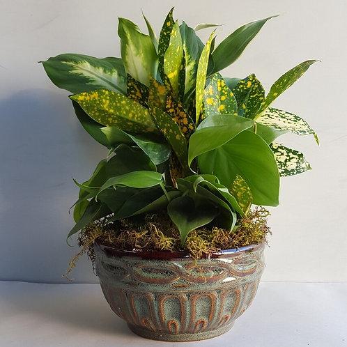 Ceramic Dish Garden- Small