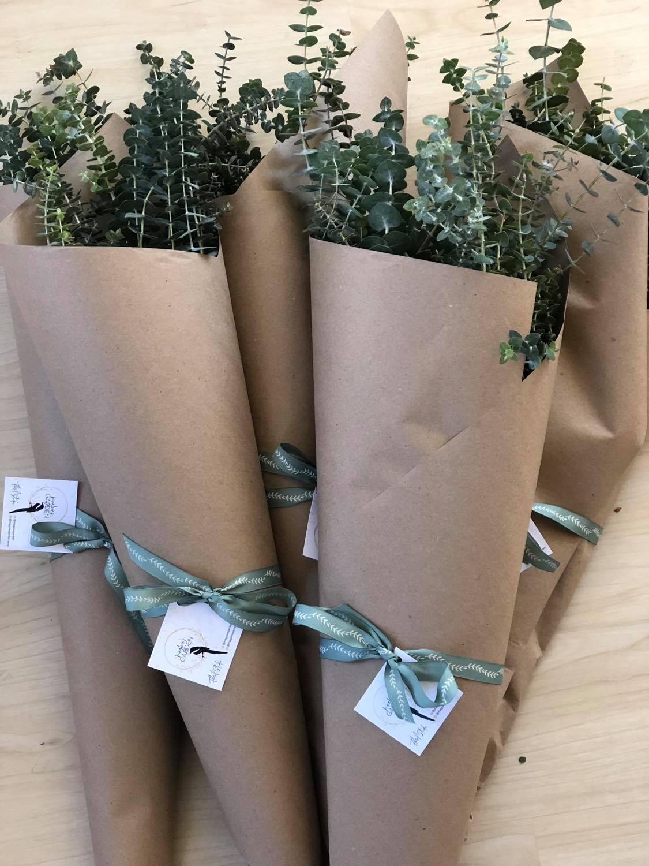 eucalyptus bunch
