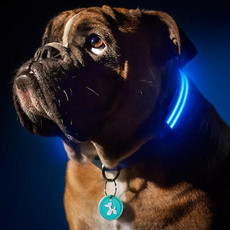 led_dog_grande.jpg