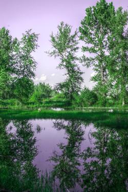 Lavender Swamp