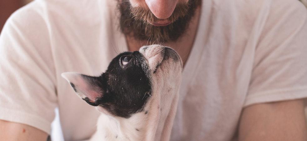 ontspannen hond die luistert
