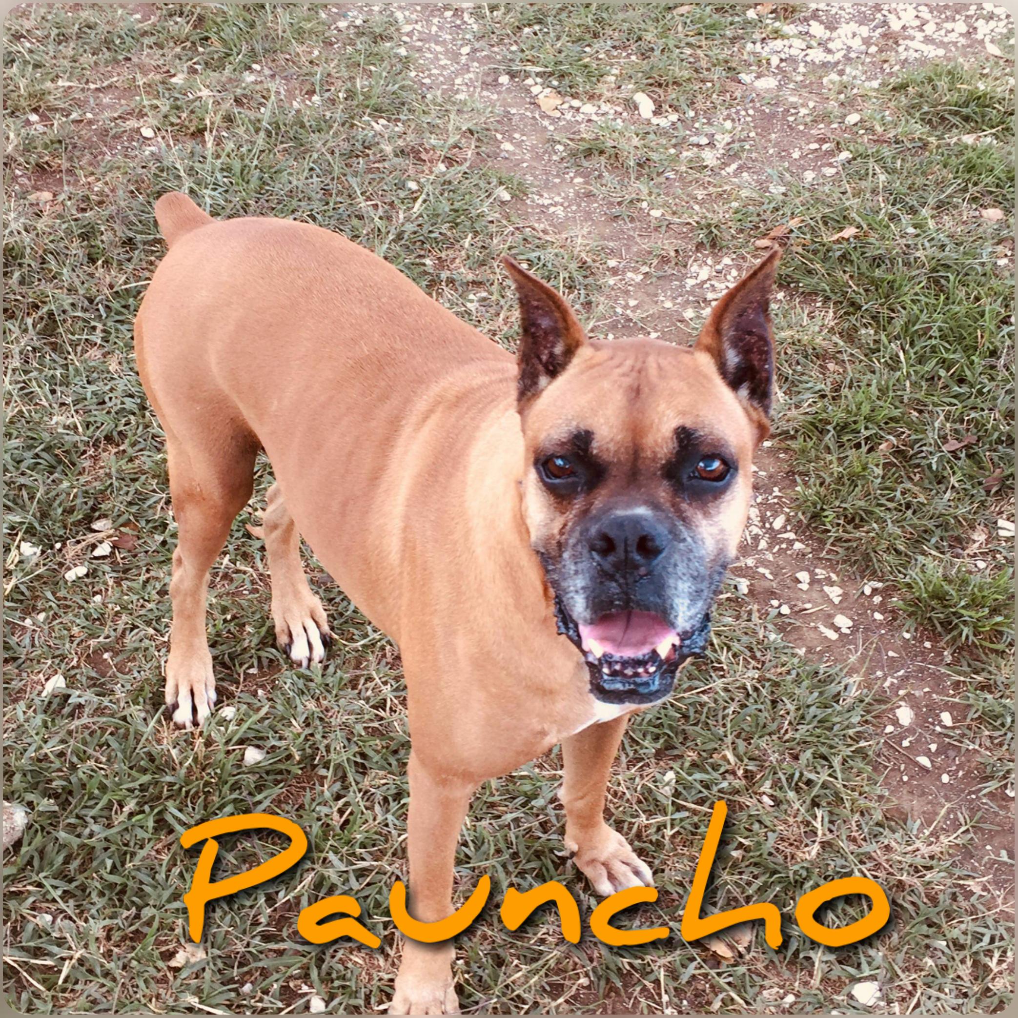 Pauncho