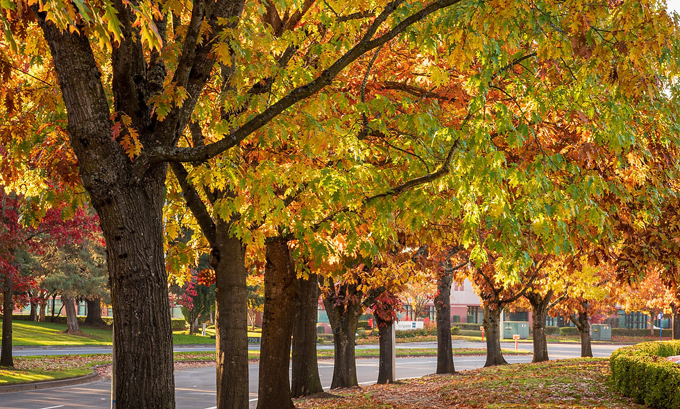 Streets of Fall
