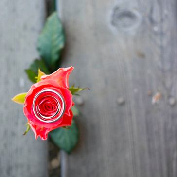 melissa jean photography - dana powers w