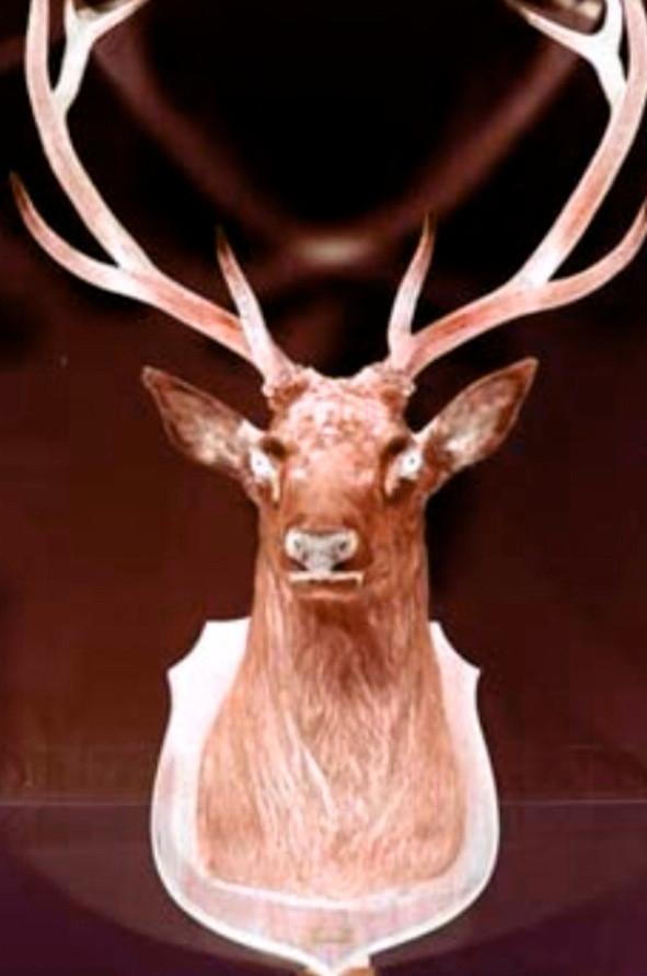 Rose Caribou