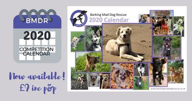 2020 BMDR Rescue Dog Calendar