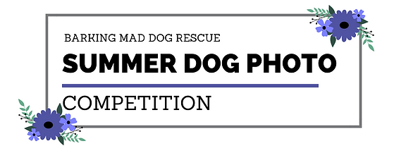 Summer Dog Photo Comp.png