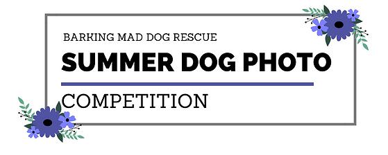 Summer Dog Photo Comp.png