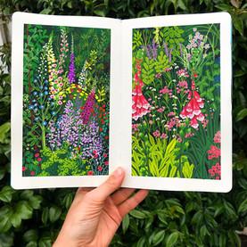 Foxglove Garden Sketchbook Studies