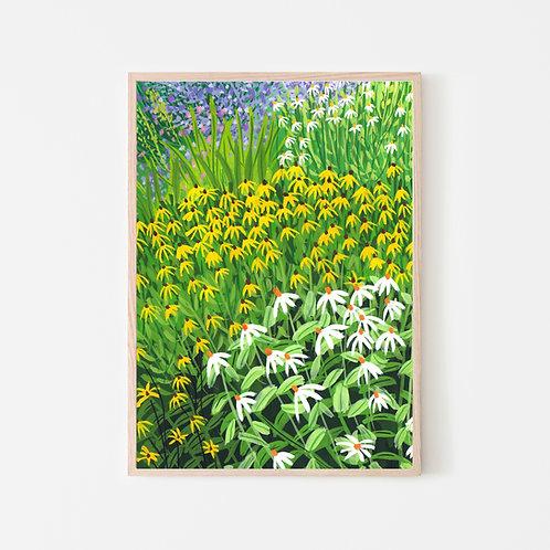 Echinacea Flower Garden Art Print