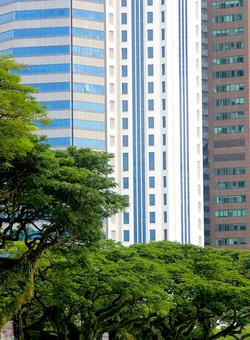 SINGAPORE AUSCULTATED FIELDS